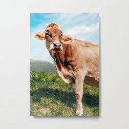 Swiss Cow Metal Print