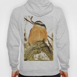Curious Nuthatch Hoody