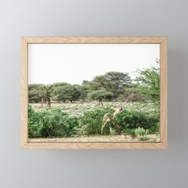 Lion in Etosha National Park - travel photography & landscapes Framed Mini Art Print