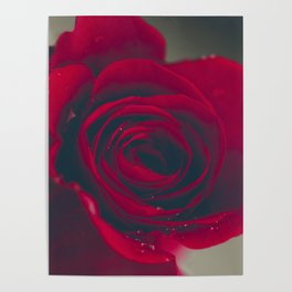 Red Rose Floral Bliss Poster