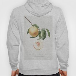 Duracina peach (Persivca Iulodermis) from Pomona Italiana (1817 - 1839) by Giorgio Gallesio (1772-18 Hoody