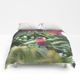 Parrot Comforters