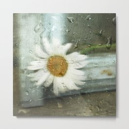 One rainy day, a daisy... Metal Print