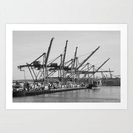 Cranes Feeding on Water Art Print