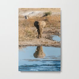 Elephant Reflection in Madikwe Game Reserve, South Africa Metal Print