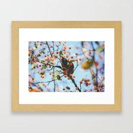 Bird & Berries Framed Art Print