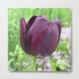451 - Purple Tulip Metal Print