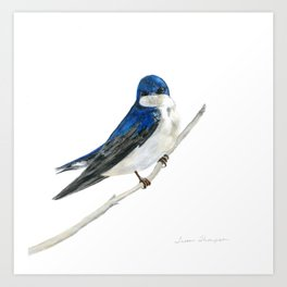 Blue Boy - Tree Swallow by Teresa Thompson Art Print