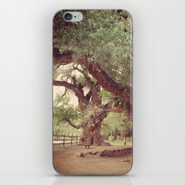 Mighty Cottonwood Trees iPhone Skin