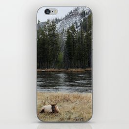 Elk in Yellowstone iPhone Skin