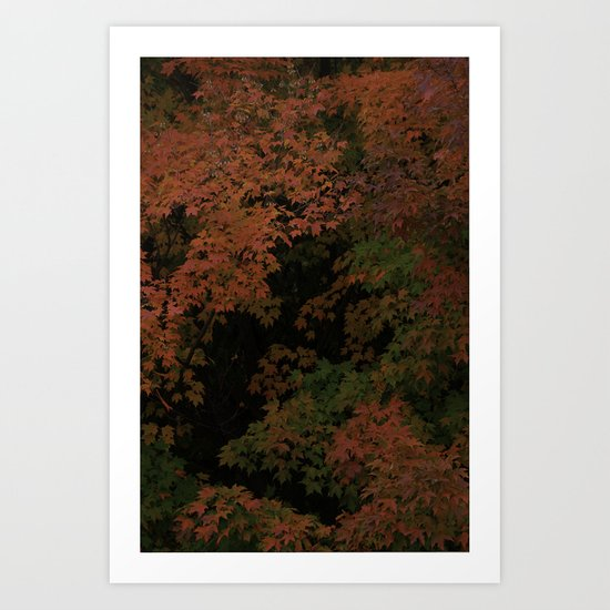 Sugar Maple 2012 Art Print