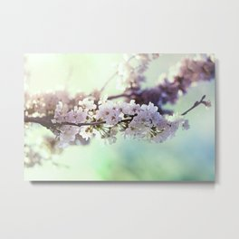 Sakura sakura Metal Print