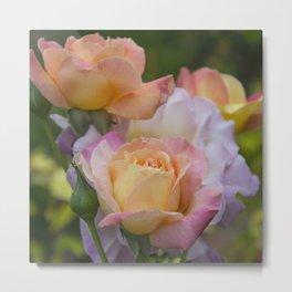 Pastel roses Metal Print