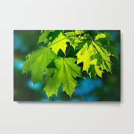 Tales From The Maple Wood Metal Print
