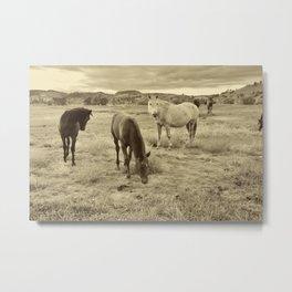 Mellow Mustangs Metal Print