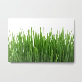 Long vertical green plants with white background Metal Print