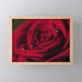 Fire - Red - Rose - Roses Flowers Framed Mini Art Print
