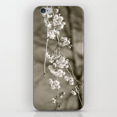 Stages of Spring iPhone & iPod Skin