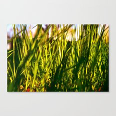 A Bug's Jungle Canvas Print