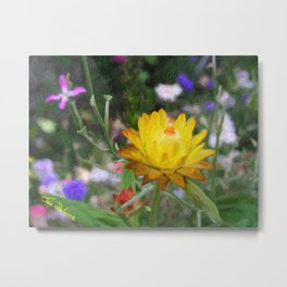 Everlasting Flower Metal Print