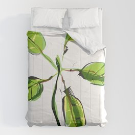 New Growth Comforters