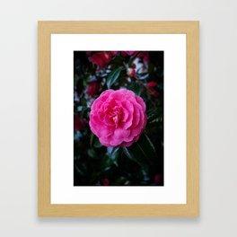 Comely Camellia Framed Art Print