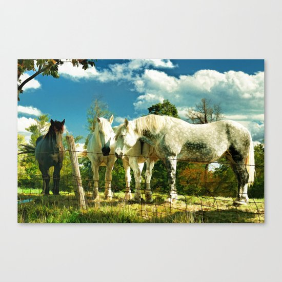 Amish work horses Canvas Print