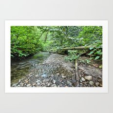 Winding Stream Art Print