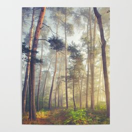 THE WOODS - 080818/1 Poster