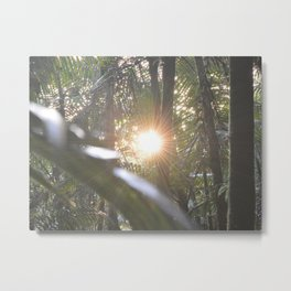 Sunset in the cloud forest  - near Tradewinds Trail - El Yunque rainforest PR Metal Print