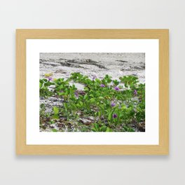 Railroad Vine on the beach Framed Art Print