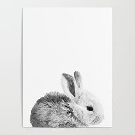 Black and White Bunny Poster