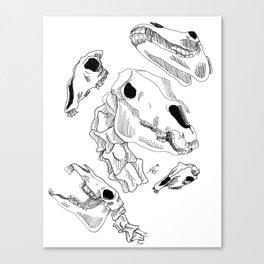 Horse skulls Canvas Print