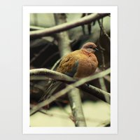 pigeon Art Prints featuring Pigeon by Zura
