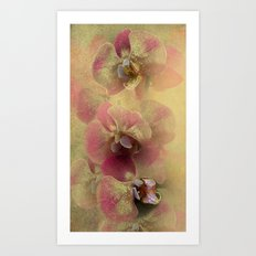 The mystery of orchid(gold). Art Print