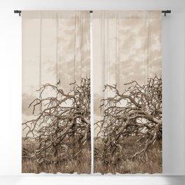 Fallen Blackout Curtain