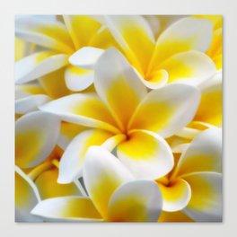Frangipani halo of flowers Canvas Print