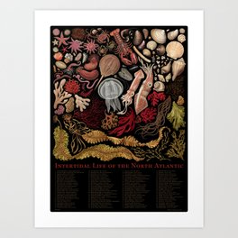 Intertidal Life of the North Atlantic (with species list) Art Print