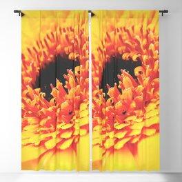 Yellow Germini Close up 3 Blackout Curtain