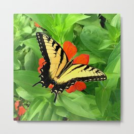 Butterfly on Zinnia 3 Metal Print