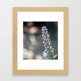 Flower Buds on a Stem Framed Art Print
