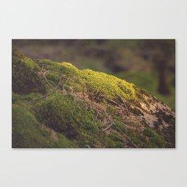 Nature's Velvet Canvas Print