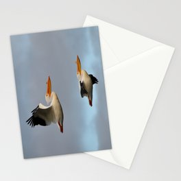 white pelican pair Stationery Cards