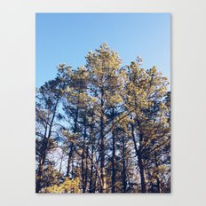 Suffolk County Park, Long Island Canvas Print