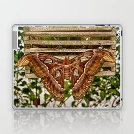 Atlas Moth Laptop & iPad Skin