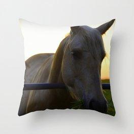 Beautiful Horse at Sunset Throw Pillow