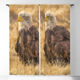 Bald Eagle Blackout Curtain