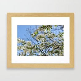 Crabapple Flowers 03 Framed Art Print