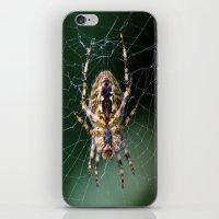 spider iPhone & iPod Skins featuring Spider by Dora Birgis