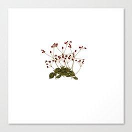 Magical flora #5 Canvas Print